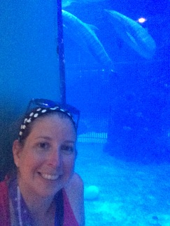 the dolphins did not want to cooperate with my selfie